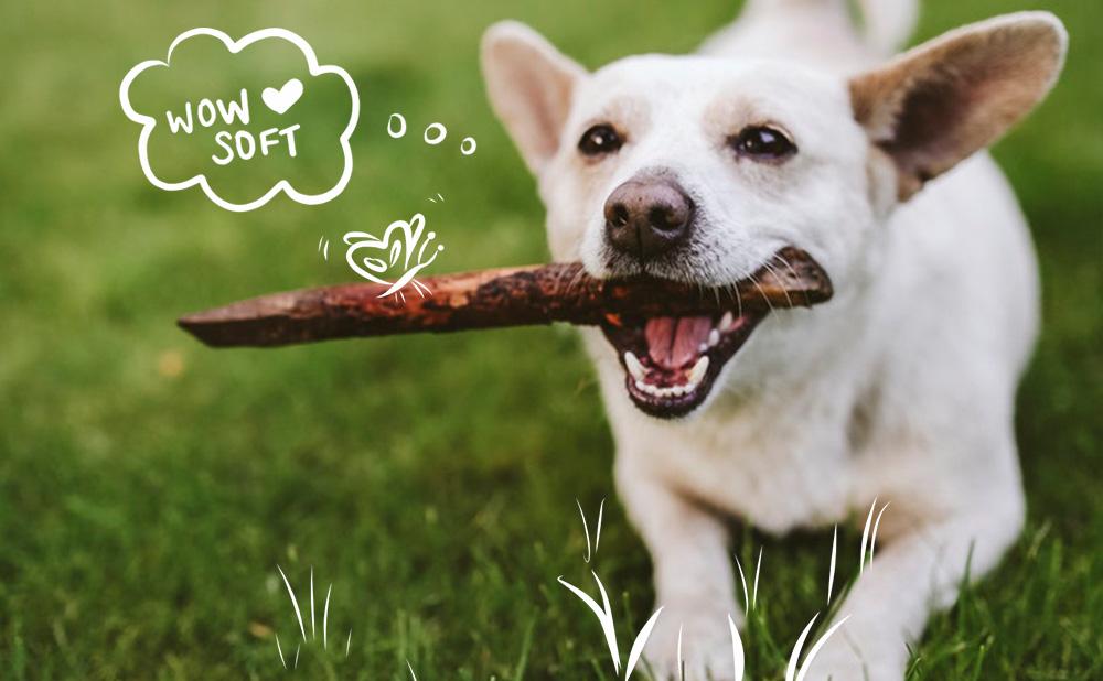 Dog on a healthy lawn