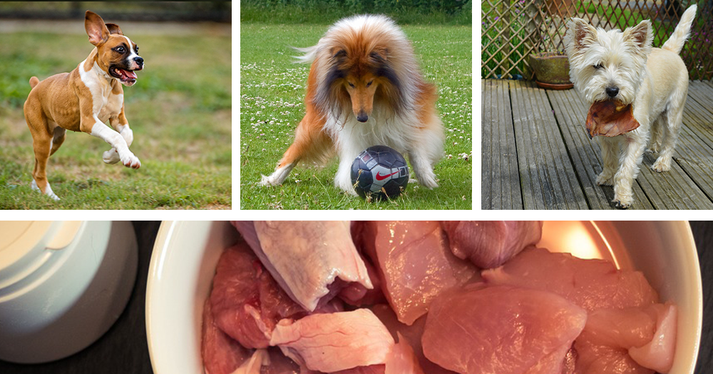 benefits of raw dog food