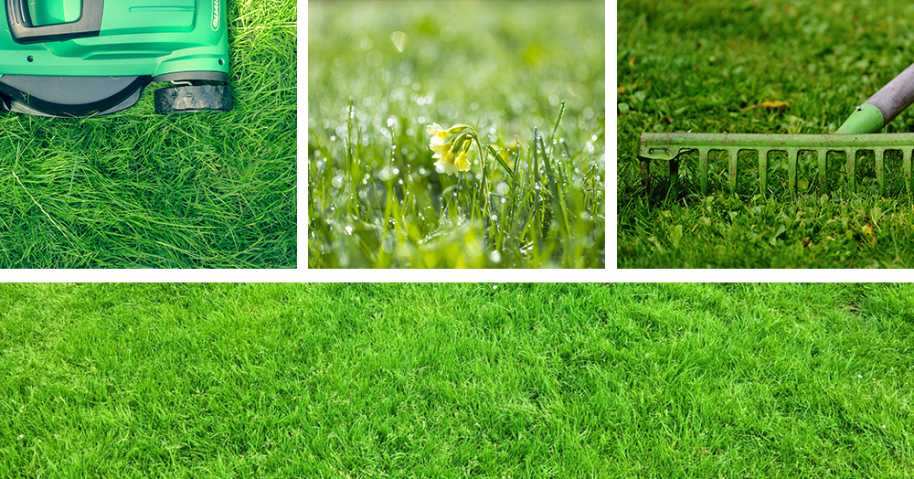 care tips for a healthy lawn collage