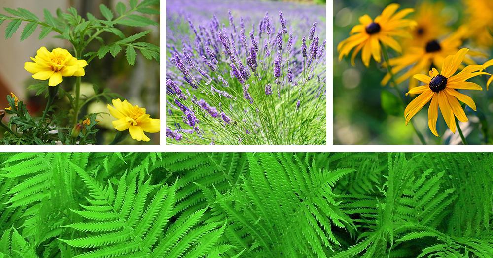 deer-repellent plants