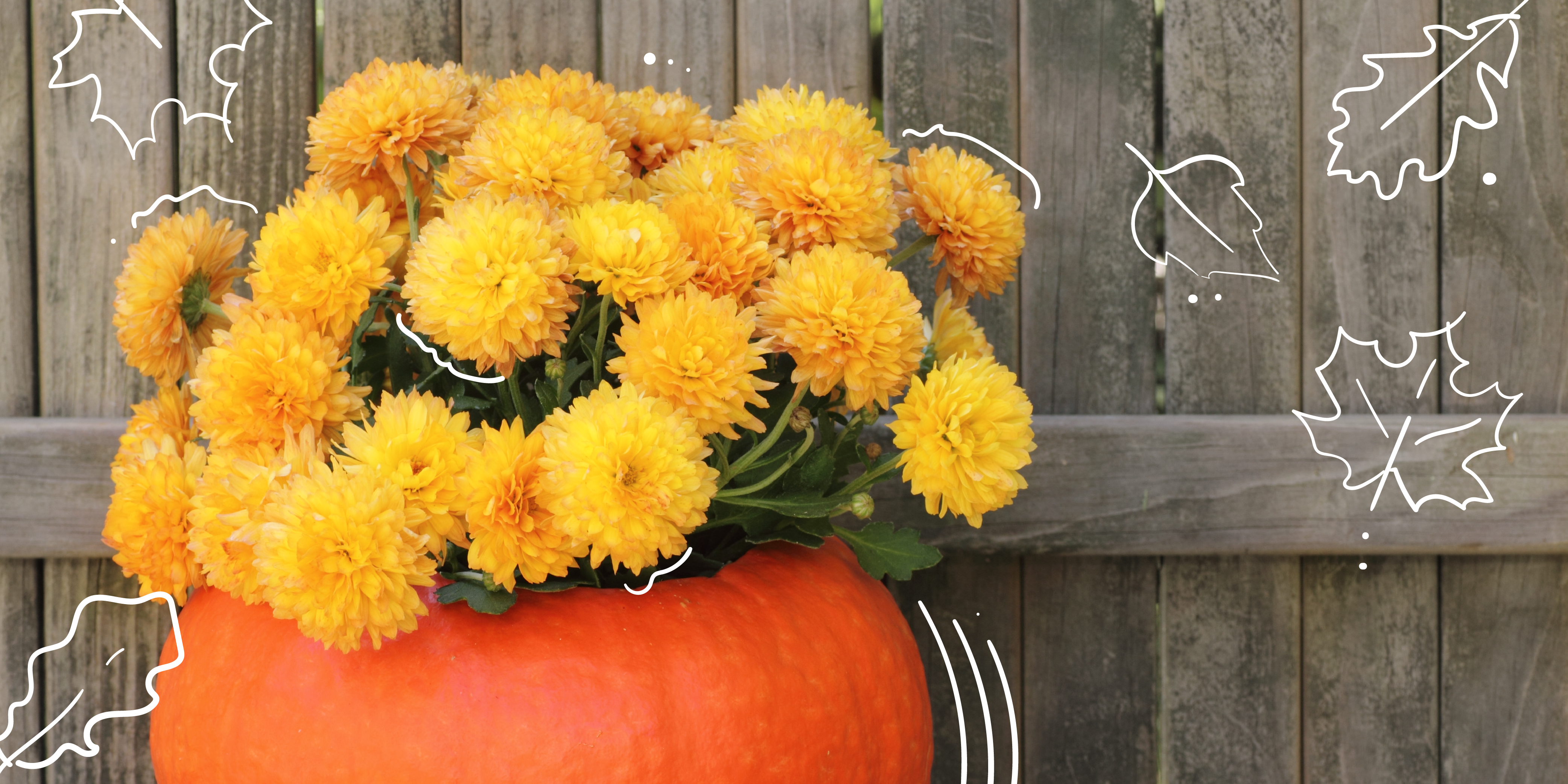sensational plants for fall container planting