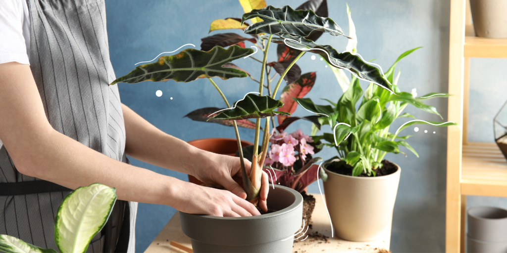 top 5 trending houseplants mother nature powell river