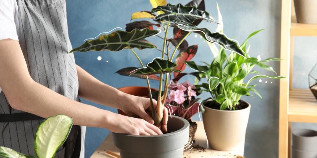top 5 trending houseplants mother nature powell river