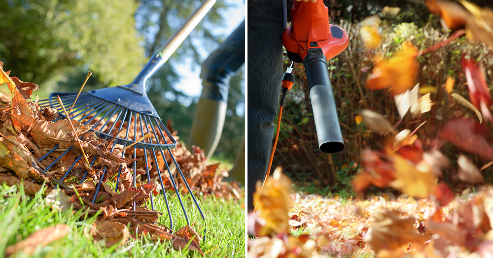 raking leaves leaf blower fall lawn care powell river