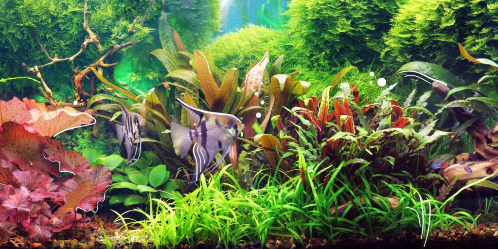 MN-blog-aquarium-plants-powell-river-01