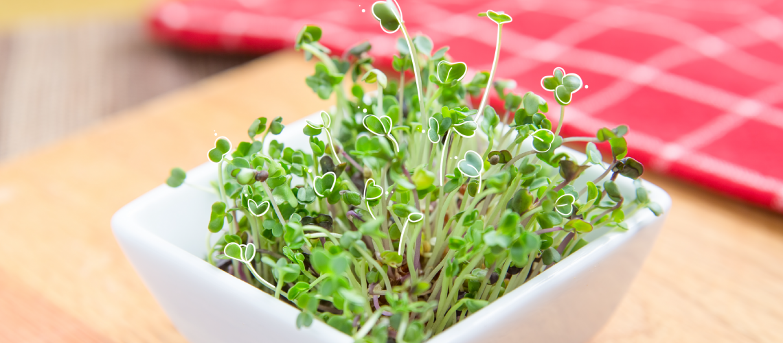 MN-blog-4 Edibles You Can Grow Indoors Right Now-01