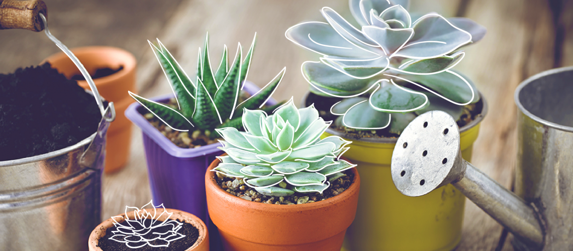 MN-blog-Tips for Keeping Succulents Healthy-01