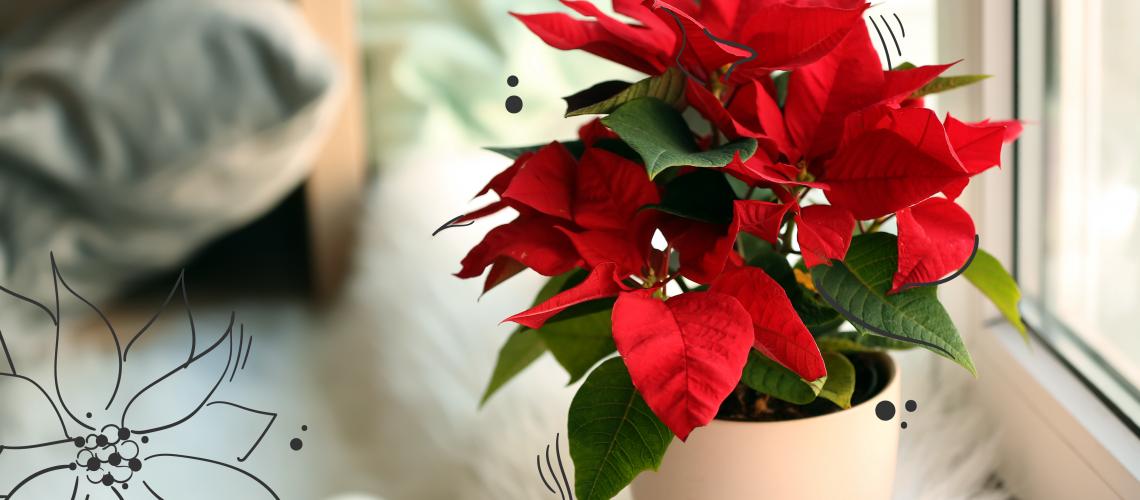 MN-blog-best-christmas-gift-houseplants-01