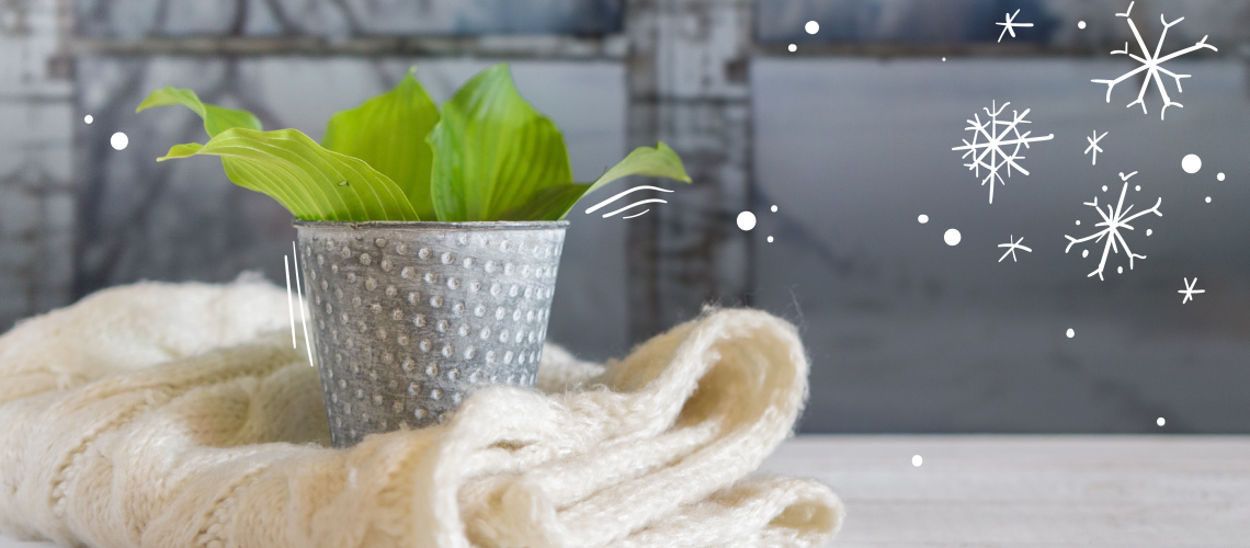 best indoor plants for bc winters