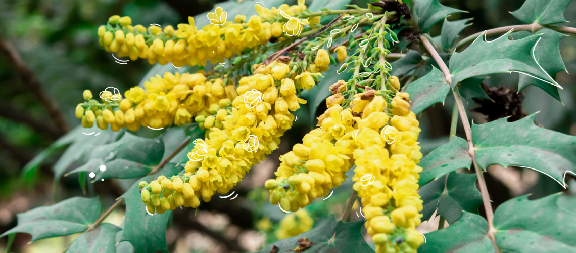 MN-blog-the-best-winter-flowering-shrubs-to-brighten-your-day-01