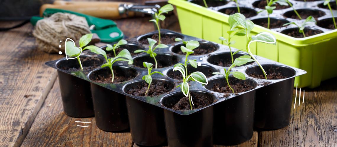 MN-blog-try-something-new-garden-ideas-for-2020-01
