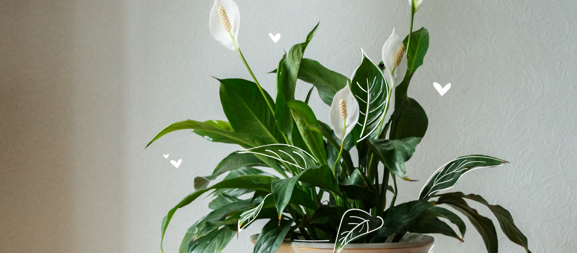 MN-blog-valentine's-day-arrangements-that-aren't-roses_v2-01