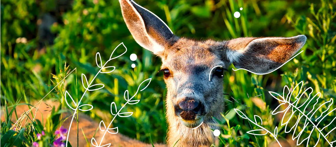 how to repel deer british columbia